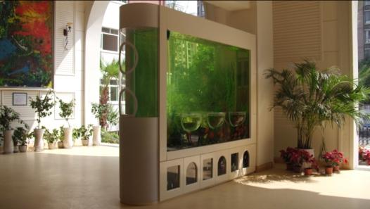 打破传统,多场景适用的神奇鱼缸——负压造景鱼缸